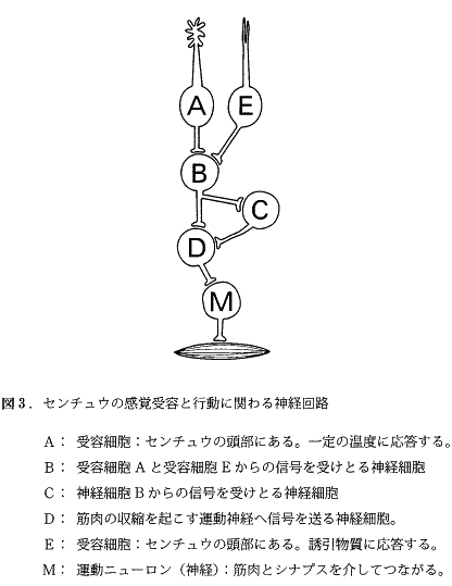 keio_med_2013_bio_q2_4.png