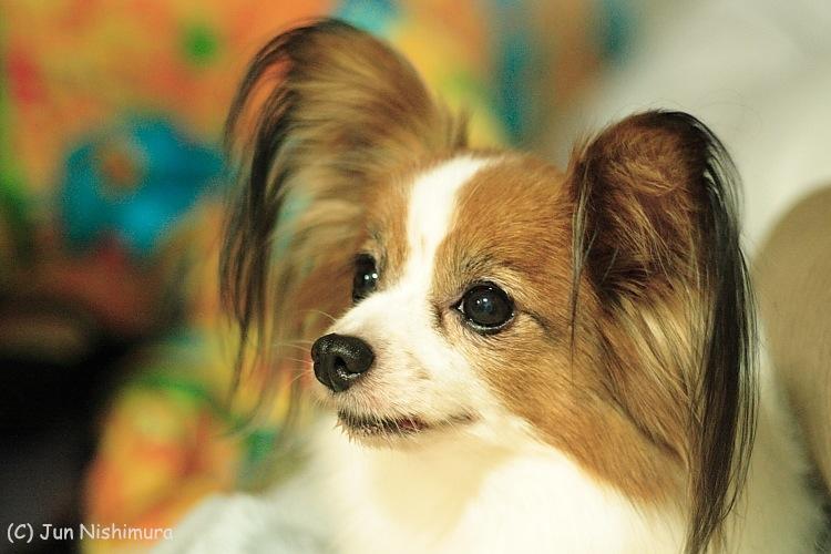2012_puppy1.jpg