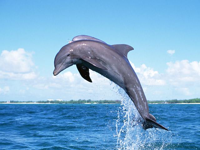 dolphin-jump.jpg