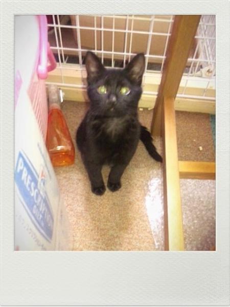 2013年09月生まれ黒猫女子02