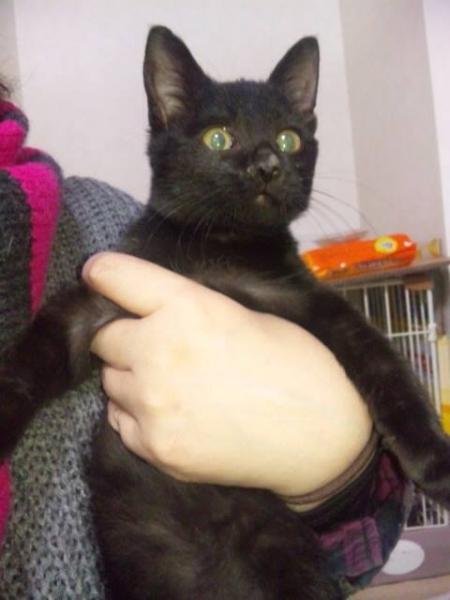 2013年09月生まれ黒猫女子01