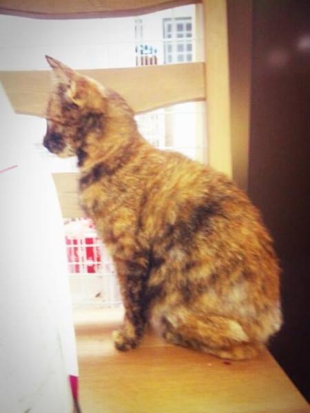 2013年07月生まれサビ猫女子02