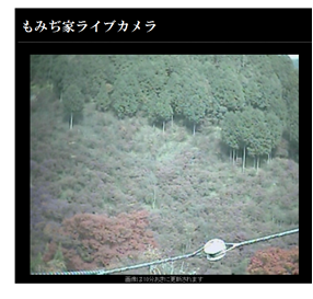 京都高尾004