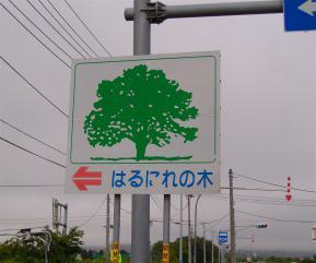 ハルニレの木看板