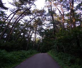 風の松原2