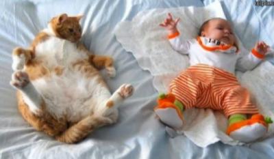 赤ちゃんと猫ピクチャ 2