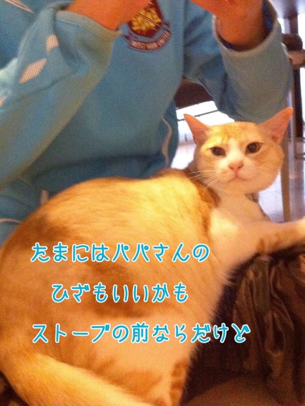 201311291501294d1.jpg