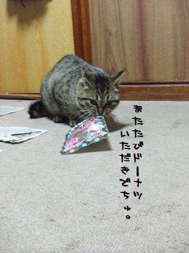 ボンちゃん泥棒猫