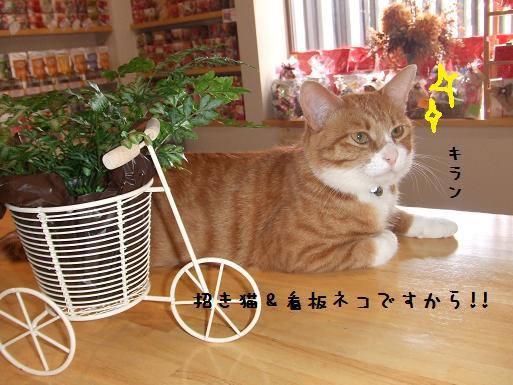 みぃ太招き猫&看板ネコ