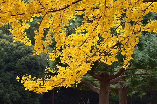 2014.11.24.代々木公園 DSC_7951