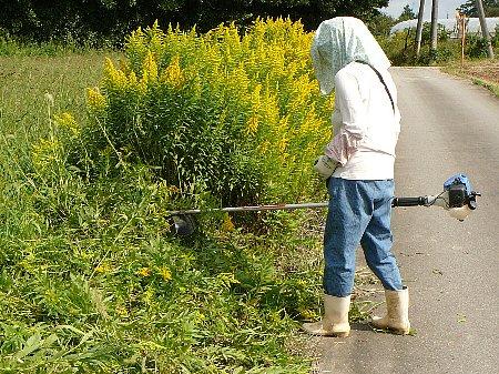 道沿い草刈り111023