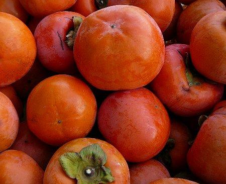 収穫直後富有柿