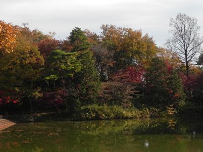 宅部池の紅葉