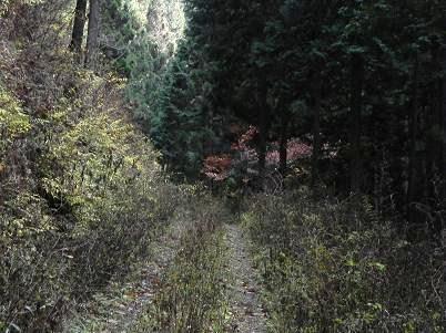 雑草が生えている矢沢林道