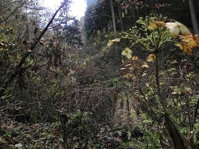 生藤山方面のヤブ