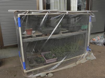 簡易温室1