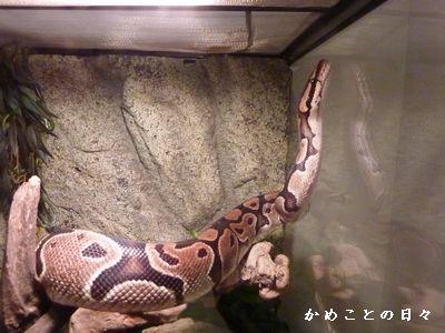 P1340997-snake.jpg