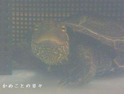P1350975-co.jpg