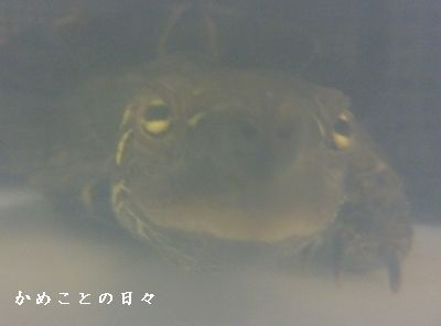 P1350978-co.jpg