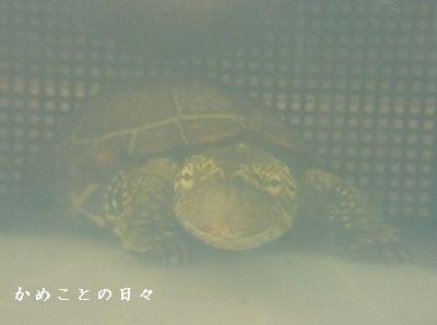P1360038-suke.jpg