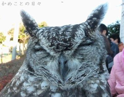 P1370040-fuku.jpg