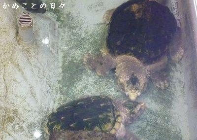 P1370689-wani.jpg