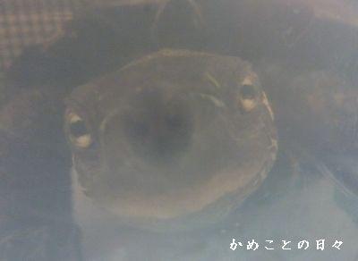 P1390811-co.jpg