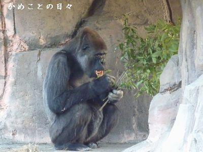 P1400557-goji.jpg
