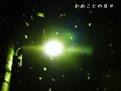 P1420049-yuki.jpg