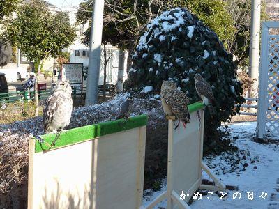P1420132-zoo1.jpg