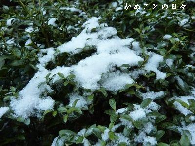 P1440730-yuki.jpg