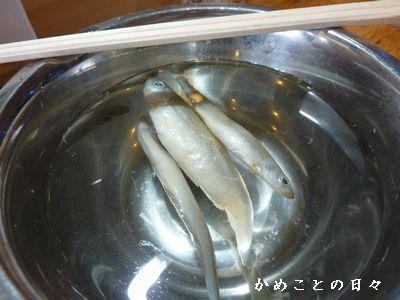 P1450738-wakasagi.jpg
