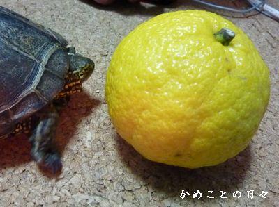 P1460597-haru.jpg