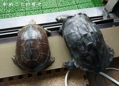 P1480540-sukeco.jpg