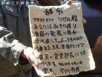 P1480948-jirei.jpg