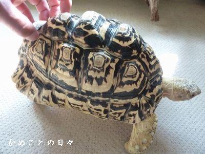 P1490048-karikari.jpg