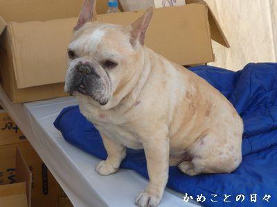 P1490700-dog.jpg