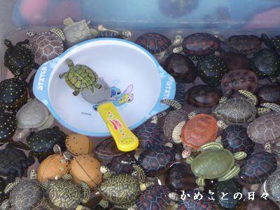 P1600835-kamesukui.jpg
