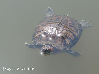 P1620011-9.jpg