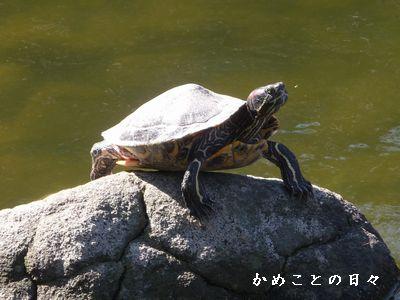 P1620188-kame.jpg
