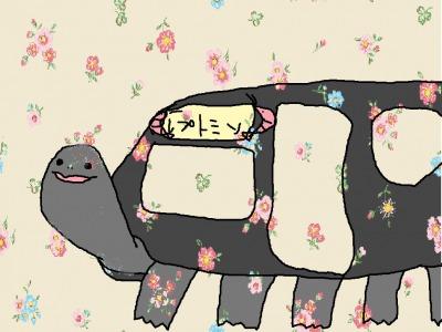 s_kamekitibasu.jpg