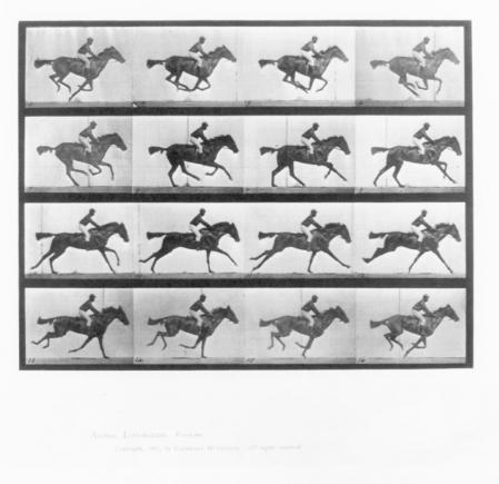 Animal-Locomotion-Photo-Horse-Racehorce.jpg