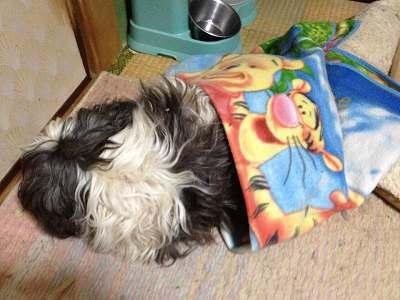 掛けて貰った毛布を引きずって居る僕