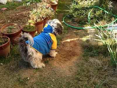 お庭で実験中(◯◯◯◯)の僕