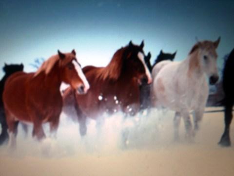 冬の道東 、雪に立ち向かう馬達