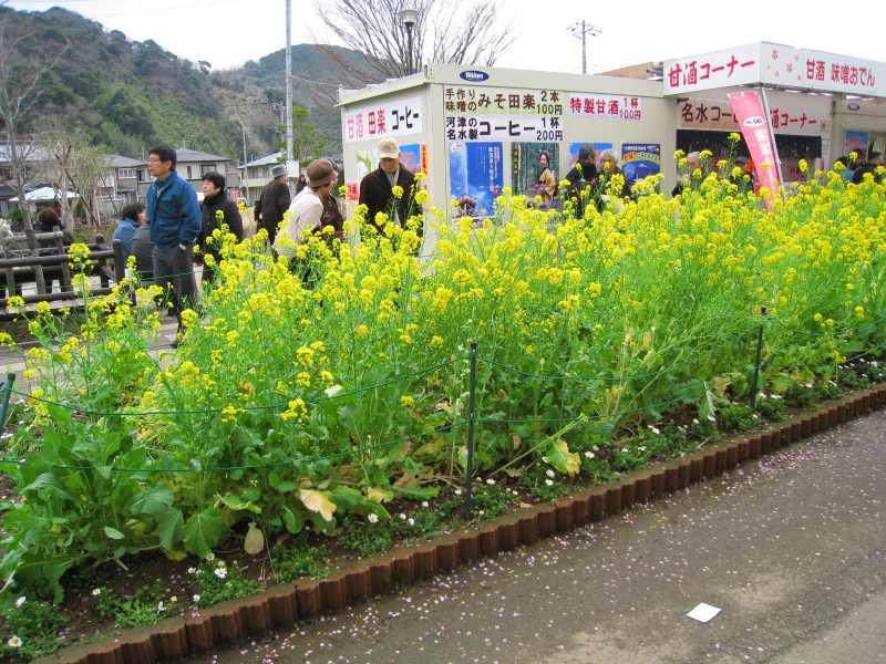 河津桜ツー2009-14