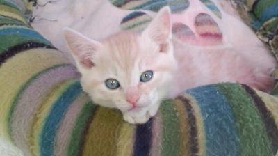 ミックス猫2