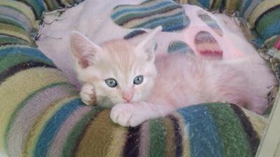 ミックス猫3