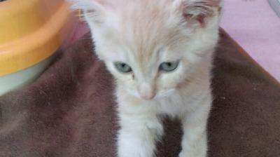 ミックス猫Ⅱ