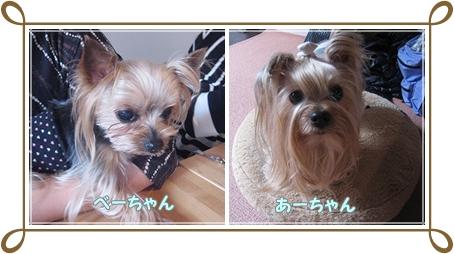 1cats_20120311183022.jpg